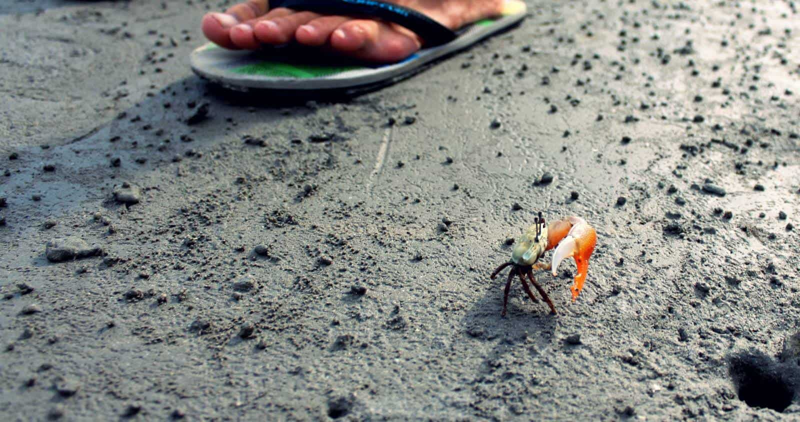 This little crab only has one claw...