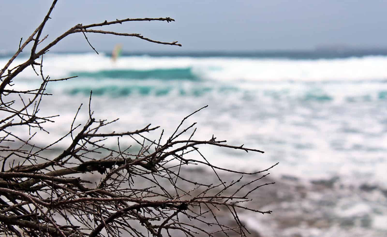 Windsurfers...even branches are more interesting..:)