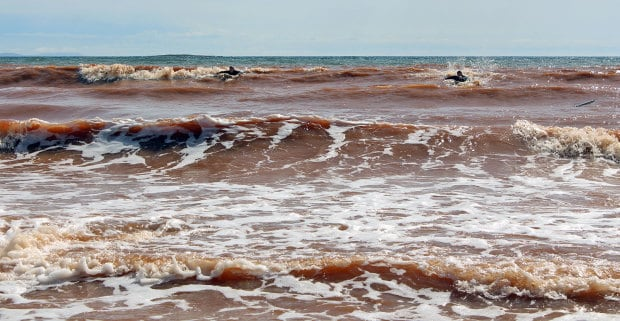 Surfers paddling for a wave