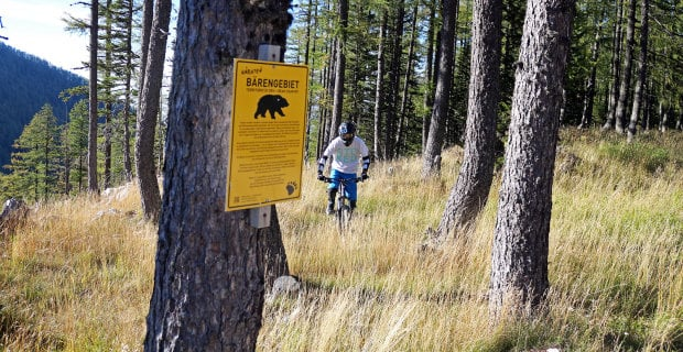 Biker in woods with bears