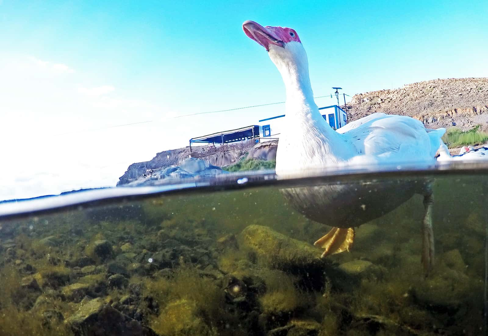 Oh, this duck is actually from Los Molinos.
