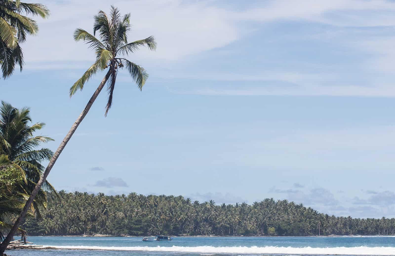 Palm tree views.
