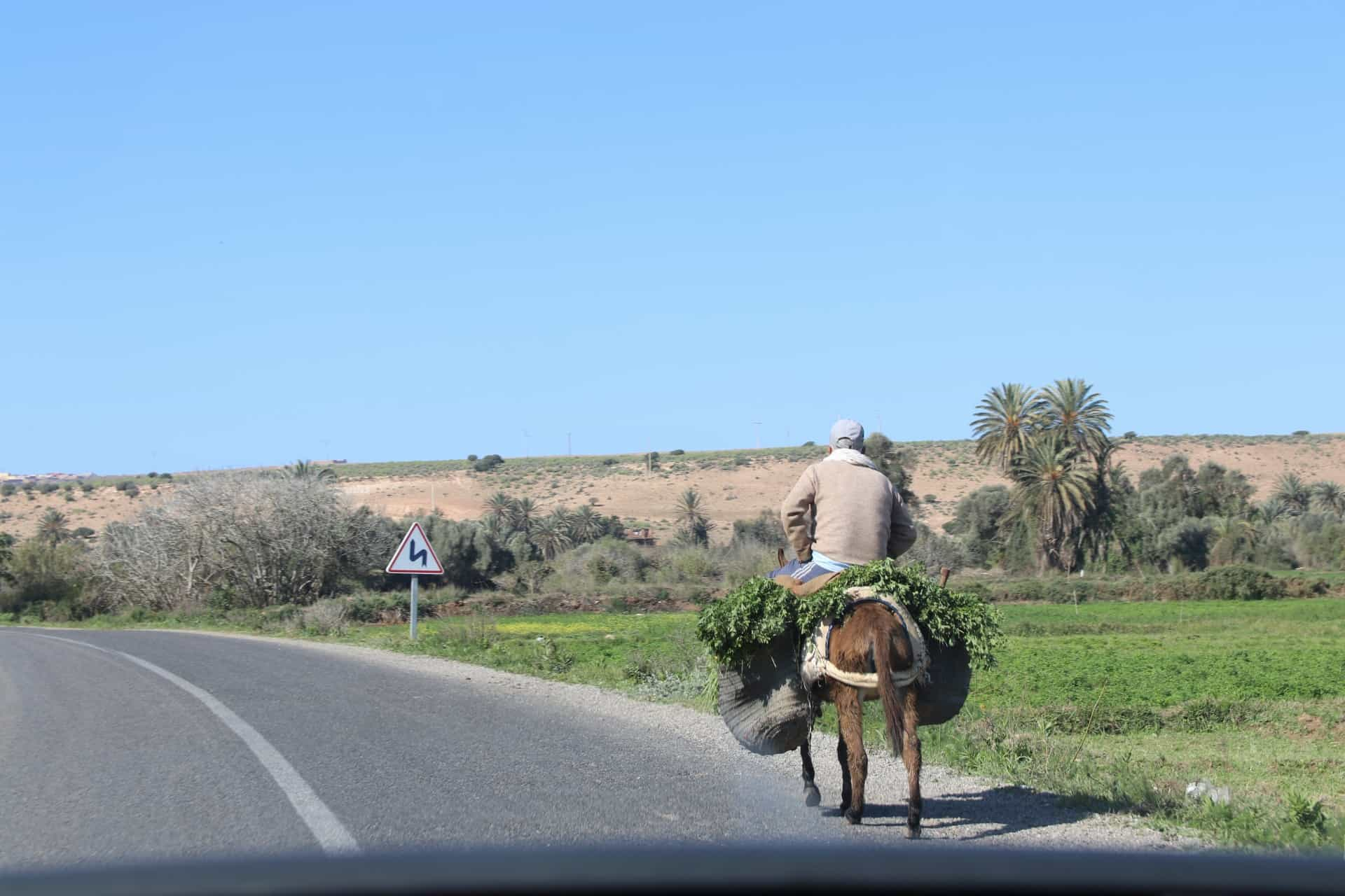 One of the rare water rich valleys has booming agriculture with donkey being the main mint plant transport vehicle.